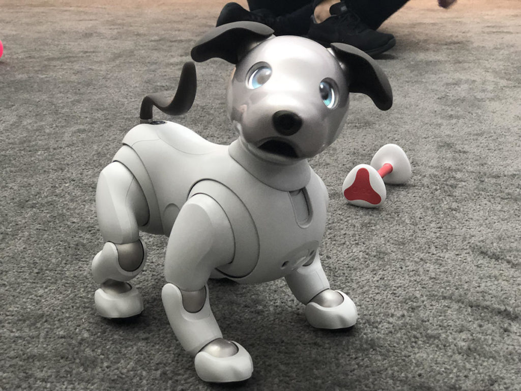 Adorable Sony Aibo, the robot dog.